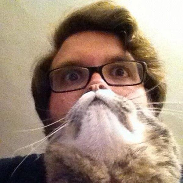 https://cdn.trinixy.ru/pics5/20121224/perfectly_timed_cat_08.jpg