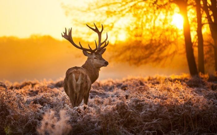 Новогоднее настроение и настоящая зима (34 фото)