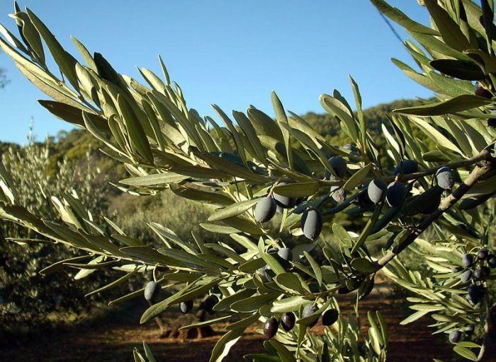 Как и где растут экзотические фрукты (36 фото)