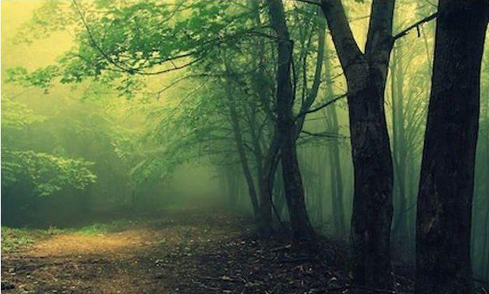 10 самых пугающих лесов нашей планеты (10 фото)