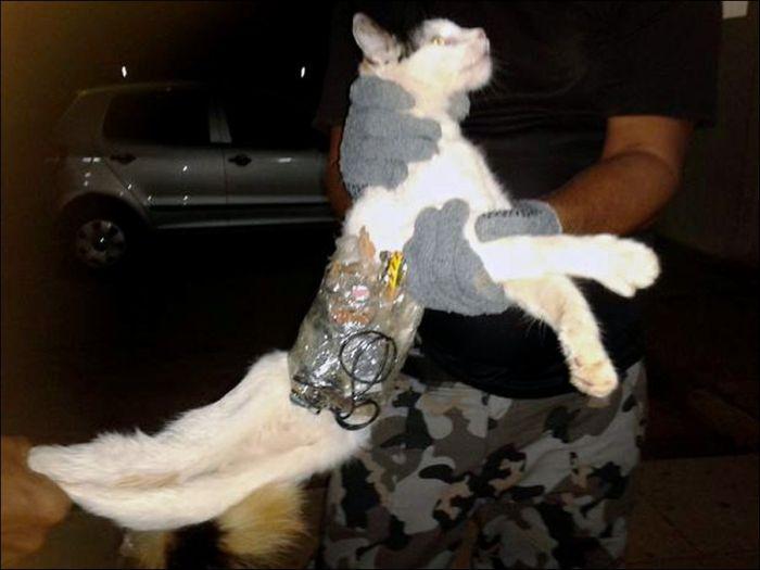 Кот-контрабандист задержан охраной тюрьмы (2 фото)