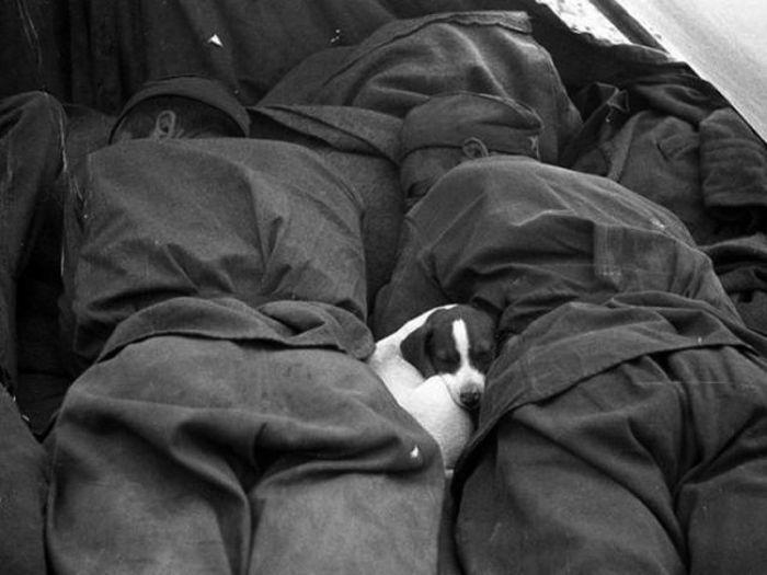 Солдаты и четвероногие друзья (52 фото)