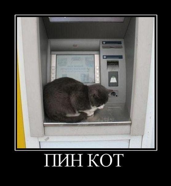 http://trinixy.ru/pics5/20130110/demotivatory_15.jpg