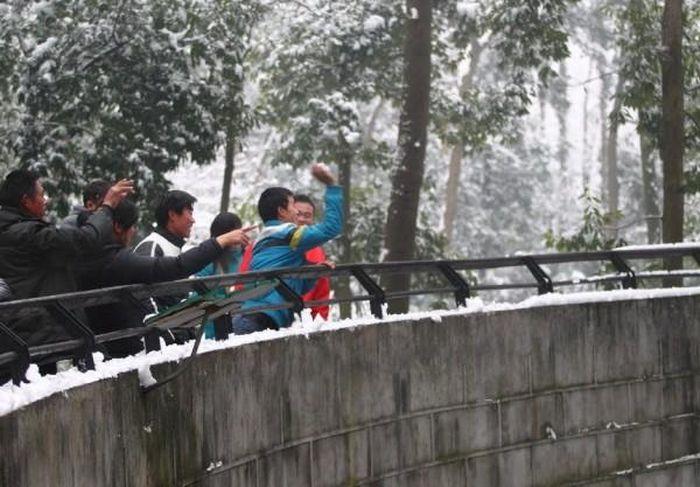 Новая забава в китайском зоопарке (6 фото)