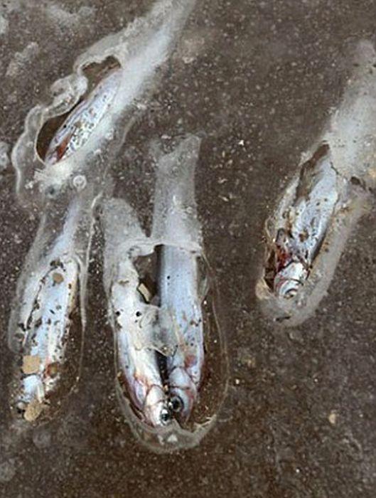 Çin'de Göl Donunca Balıklar da Dondu(9 Fotograf)