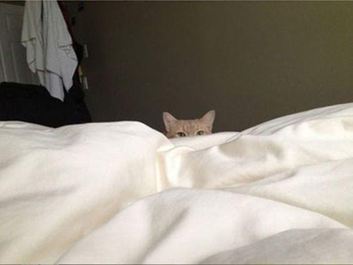 Как просыпаться по утрам без будильника (4 фото)