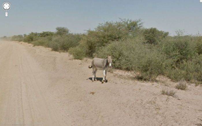 Гугломобиль против ослика (11 фото)