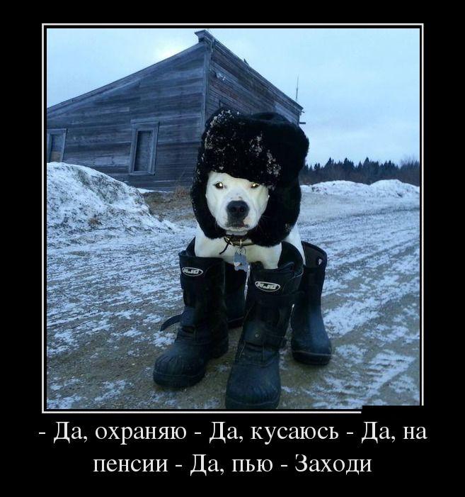 http://de.trinixy.ru/pics5/20130121/demotivatory_01.jpg