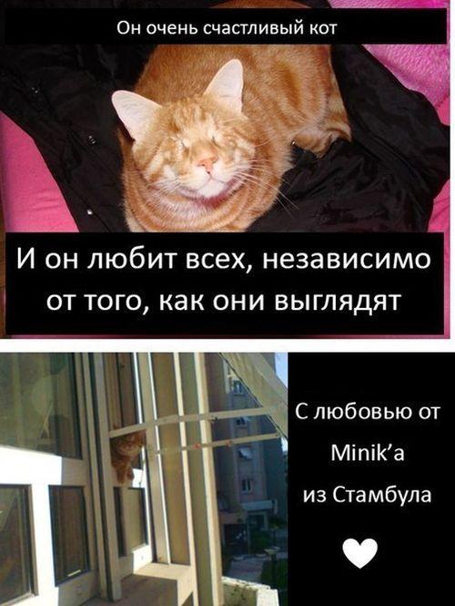 Грустная история счастливого кота (9 фото)