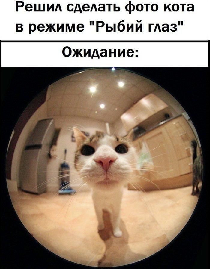"""Снимки котэ с эффектом """"Рыбий глаз"""" - ожидания и реальность (2 фото)"""