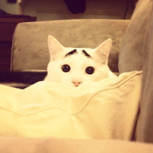 """Необычный кот, которого прозвали """"Бровастиком"""" (30 фото)"""