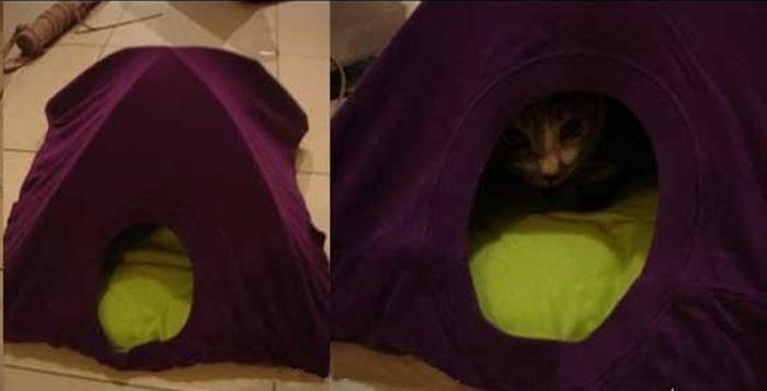 Casa creativo para su amada mascota (3 fotos)