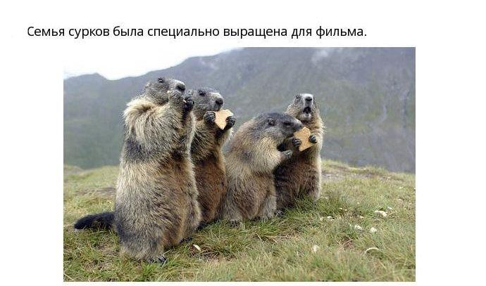 """13 интересных фактов из фильма """"День Сурка"""" (12 фото)"""