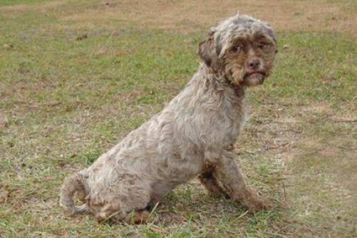 Необычный пес с человеческим выражением лица (4 фото)