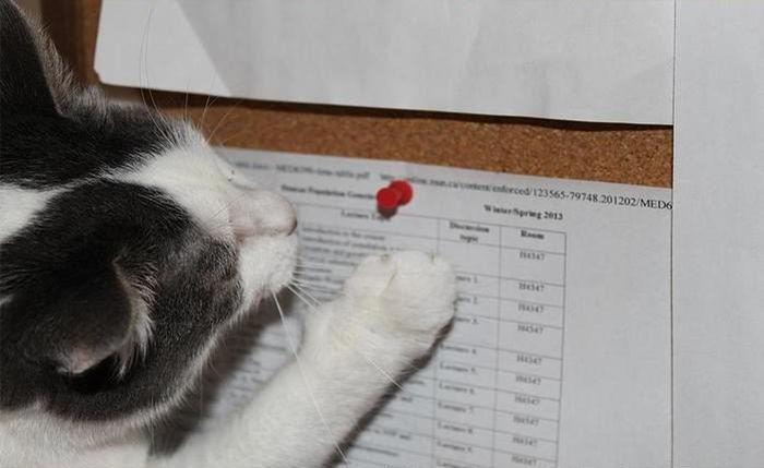 Доказательства преступления сурового котэ (5 фото)