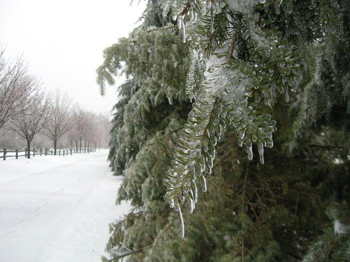 Ледяной дождь сотворил чудеса (40 фото)