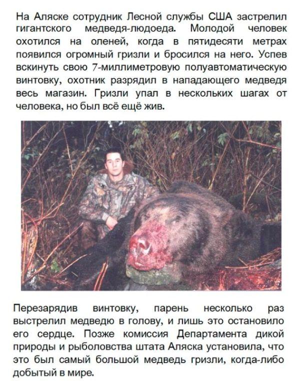 Самый большой в мире медведь гризли (2 фото)