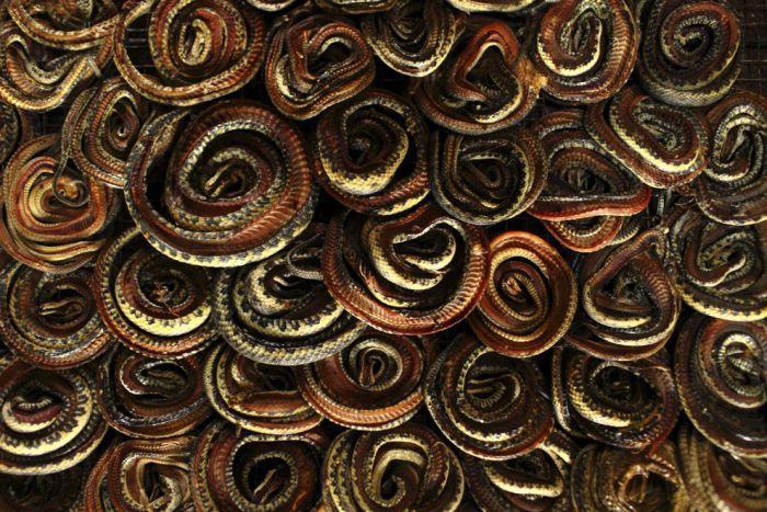 Сумки из змеиной кожи: как все происходит (22 фото)
