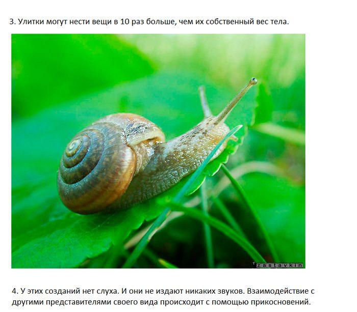Интересные факты об улитках (7 фото)