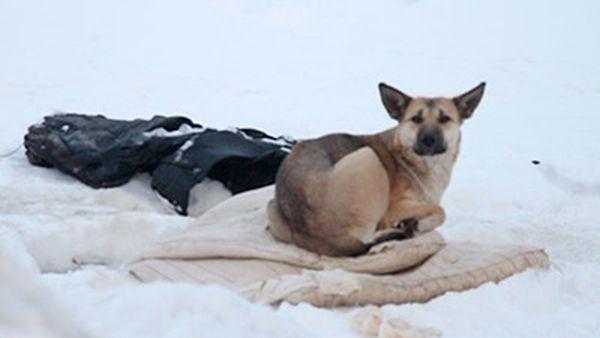 Собака охраняет тело мертвой подруги (1 фото + видео)