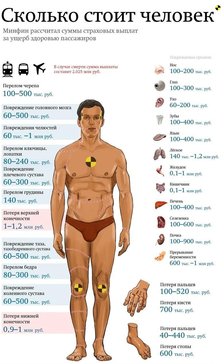 Стоимость человека (1 картинка)