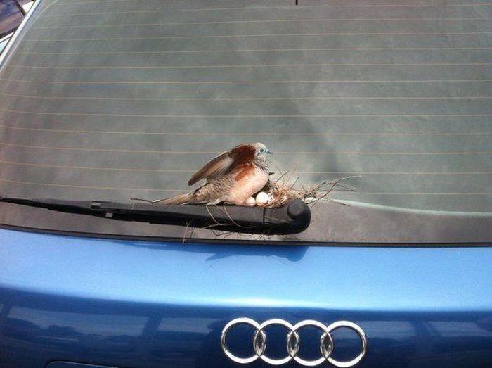 Подборка автомобильных приколов. Часть 4 (40 фото)