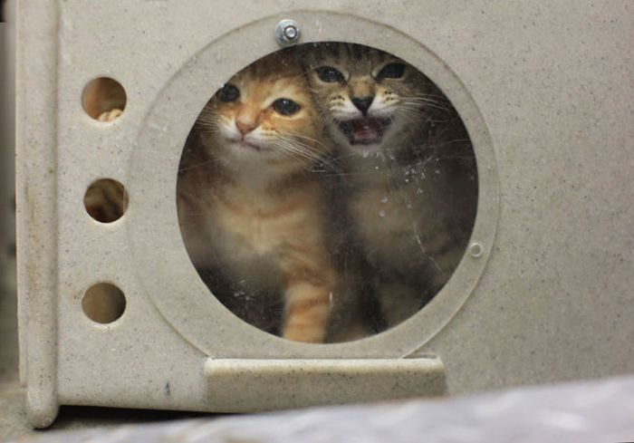 Шокирующая статья о приютах для животных в США (25 фото)