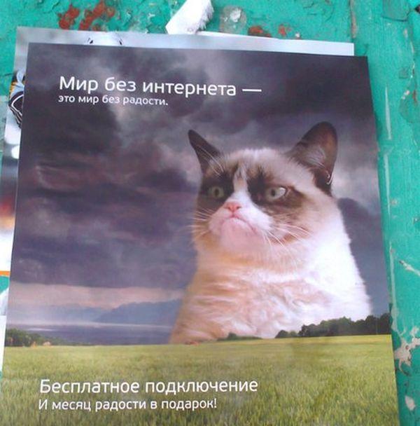 Прикольные картинки (100 фото)