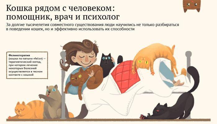 Коты и кошки в жизни человека (1 картинка)