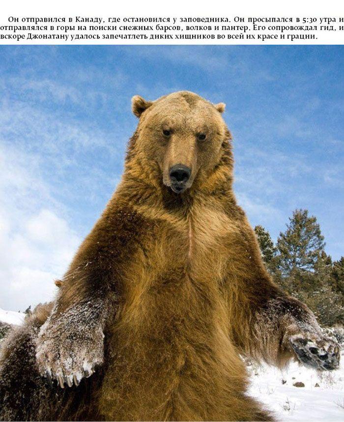 Поразительные и опасные фотографии животных (15 фото)