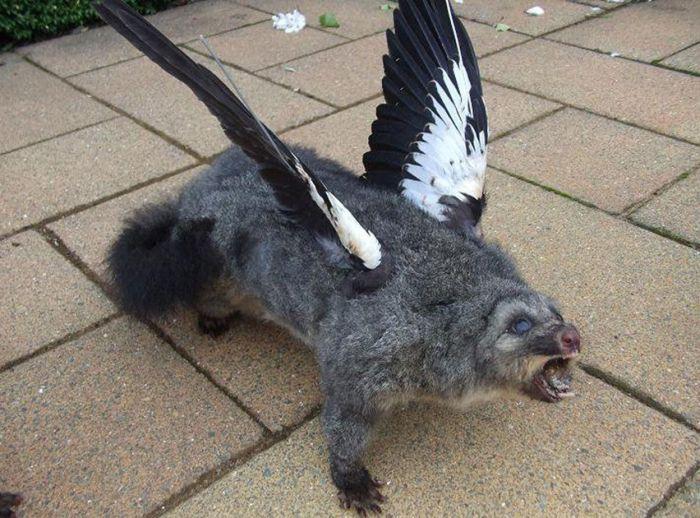 Сумасшедшие чучела животных от креативного таксидермиста (33 фото)