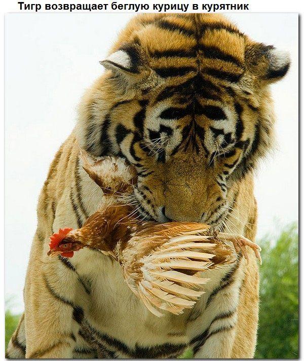Взаимопомощь животных. Всем добра! (9 фото)