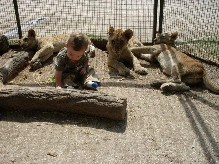Необычный зоопарк в Аргентине (9 фото)