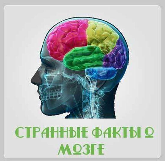 Все ли вы  знаете о своем мозге, 15 фактов о ваших извилинах (16 фото)