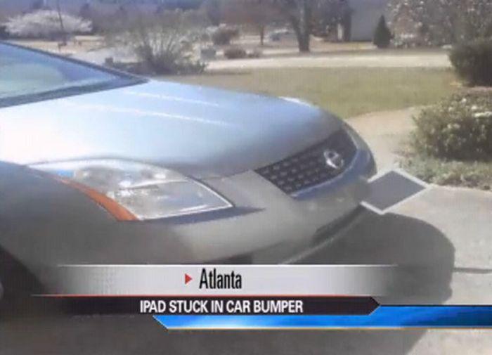 Неожиданный сюрприз застрял в переднем бампере автомобиля (6 фото)