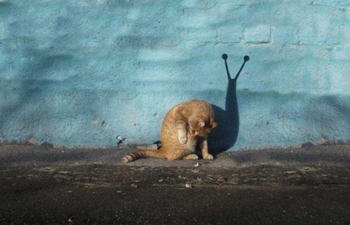"""""""Мастера"""" фотошопа из социальных сетей (52 фото)"""