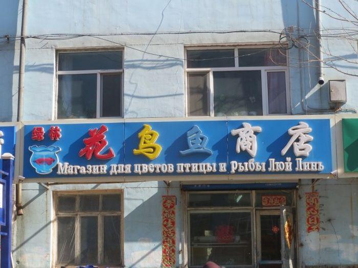 Сложности перевода на русский язык в Китае (93 фото)