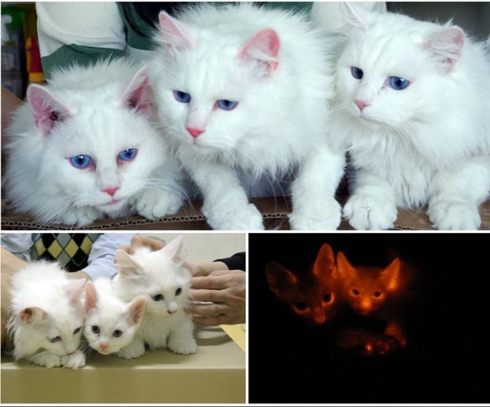 Удачные попытки клонирования различных животных (12 фото)