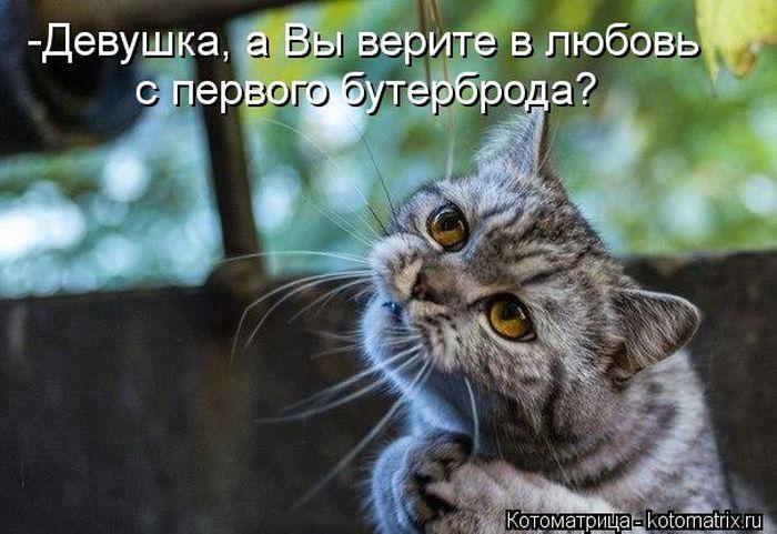 kotomatrix_26.jpg