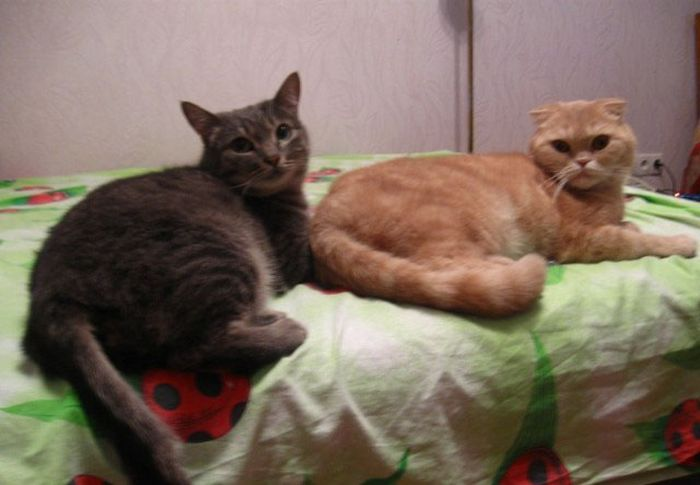 Как девушка спасла раненую кошку от гибели (6 фото)