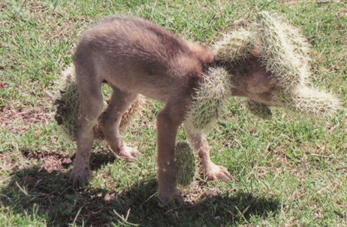 Fuentes de información cachorro cactus
