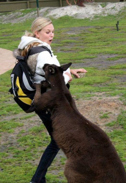 Не все девушки умеют находить общий язык с животными (35 фото)