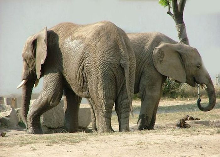 ТОП-10 видов животных с нетрадиционной ориентацией (10 фото + текст)