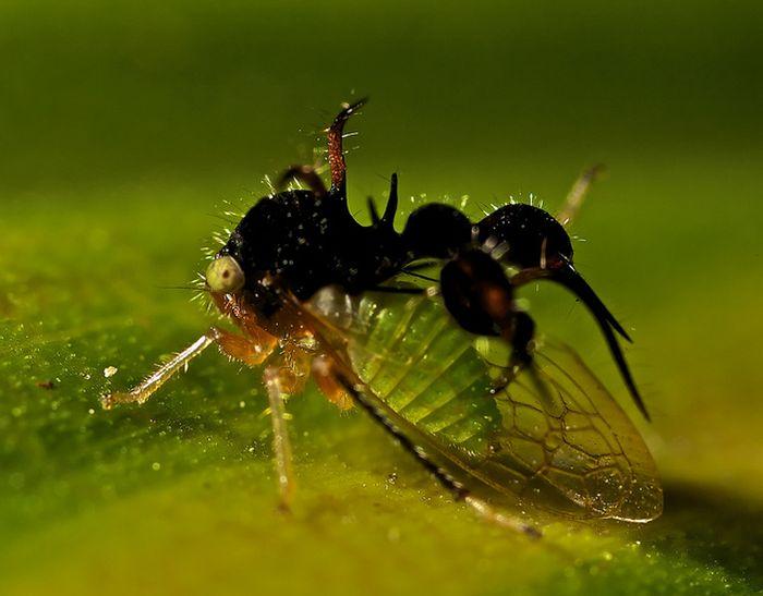 Необычные создания, о которых мало что известно (30 фото)