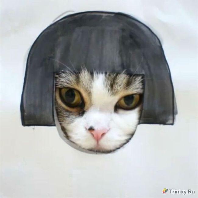Коты, ставшие интернет-знаменитостями и мемами (6 фото + 1 видео)