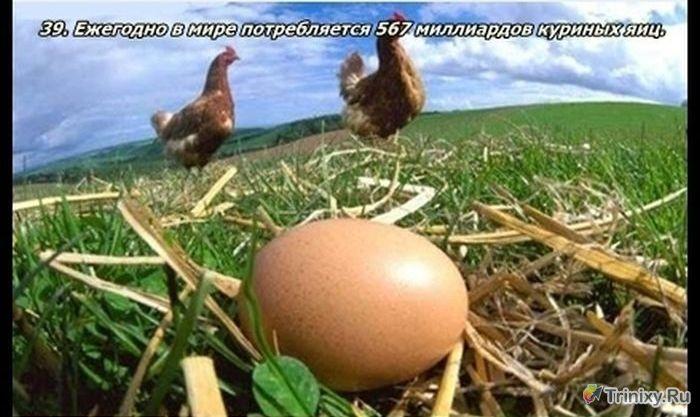 Европейских фермеров подвели яйца, выдаваемые за органические.  В Германии и Голландии назревает скандальное...