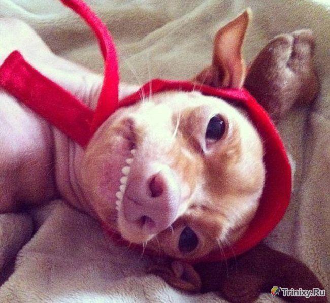 Разбогатела с помощью страшной собаки (8 фото)