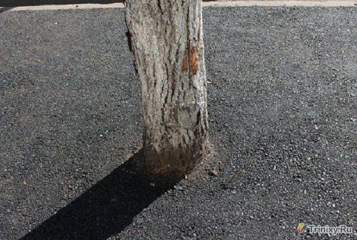 Новый способ коммунальщиков по уходу за деревьями (3 фото)