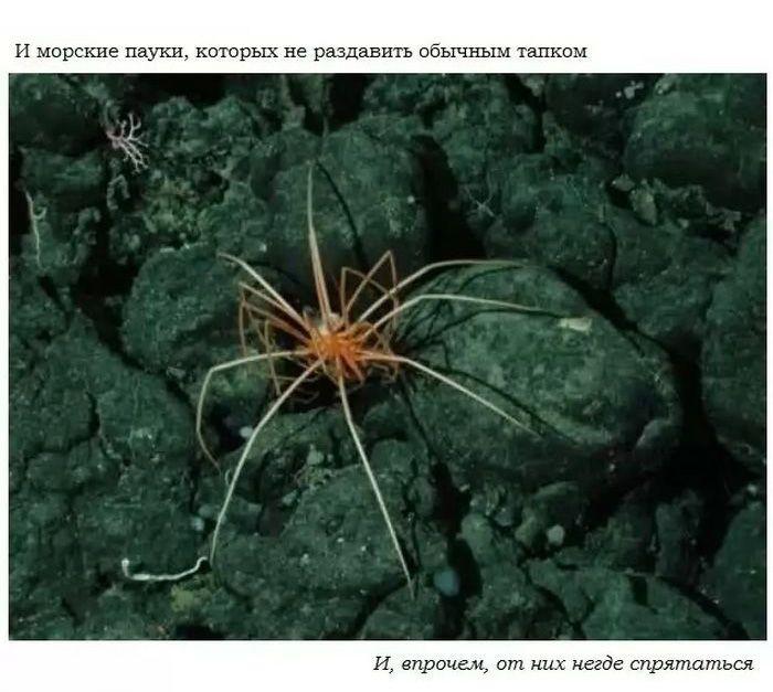 Пугающие тайны подводных глубин (18 фото)