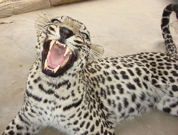 Дантист для животных (19 фото)